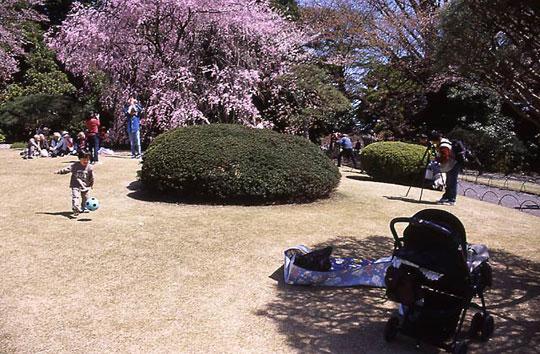 新宿御苑、枝垂桜、しだれざくら、2002-03-30-003.jpg