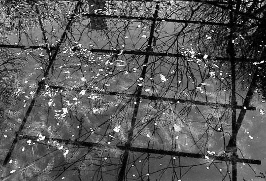 湯島天神、池、2002-02-23-006bw.jpg
