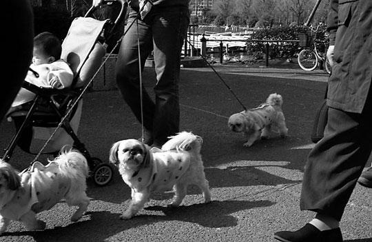 不忍池、犬、2002-02-23-009bw.jpg