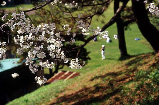 四谷、上智大学グラウンド、2002-03-28-003.jpg