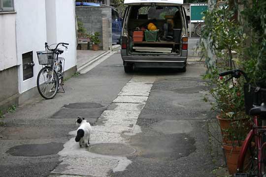 谷中、猫、2004-12-07-029.jpg