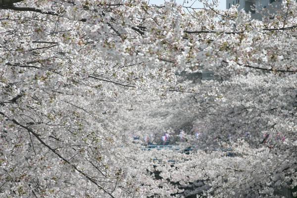2006-03-31-002.jpg