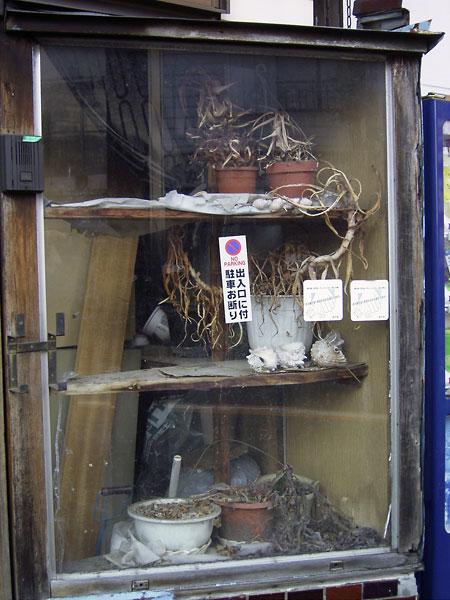 2006-11-25-022.jpg