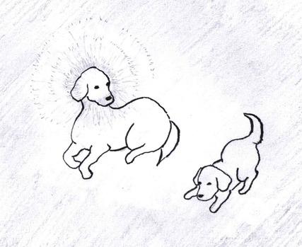 親犬仔犬2