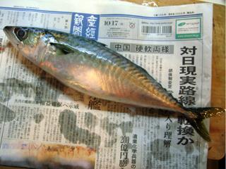 02松輪の鯖です.jpg