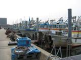 ららぽーとを望む漁港