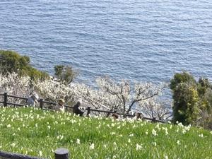 灘黒岩水仙郷3