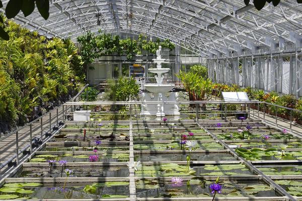 熱川バナナワニ園の温室2018