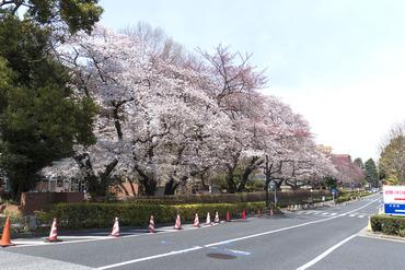 東京大学2015