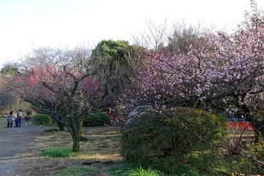 小石川植物園2015-1