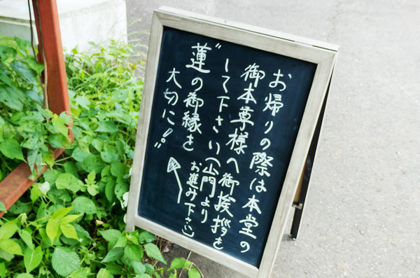 蓮興寺の蓮の花2
