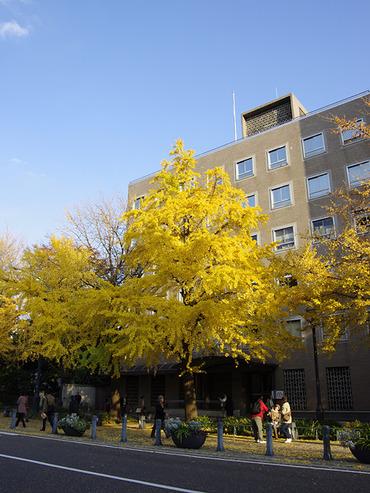 横浜紅葉2011-1