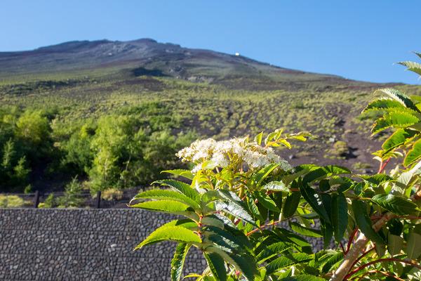 富士山とナナカマドの花