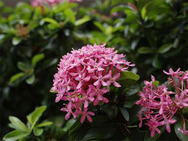 沖縄空港の花
