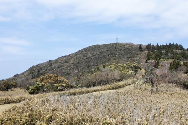 金冠山のマメザクラ2021-2