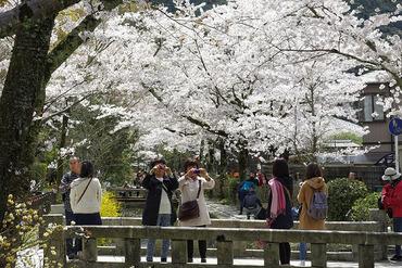 京都201404-3