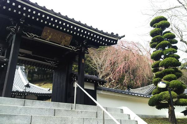 玉澤の桜2017-1