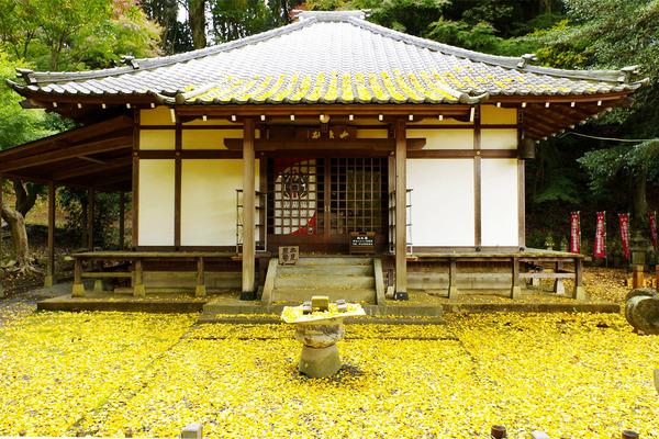 益山寺の大銀杏2016-2
