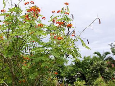 沖縄の花1