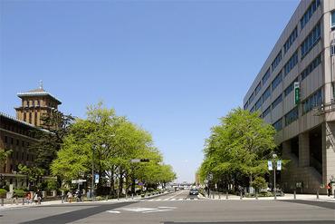 日本大通り 春の銀杏並木