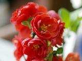 花咲のぼけ