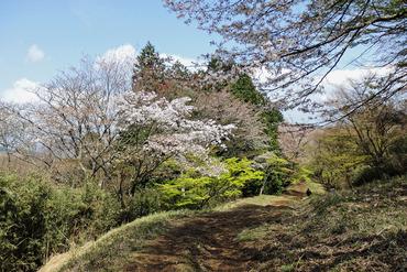 箱根湯坂路2015-1