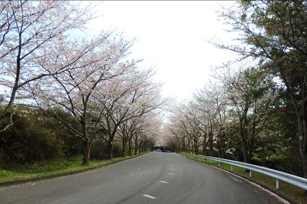 愛鷹広域公園201704-1
