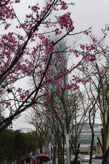 台北101と桜