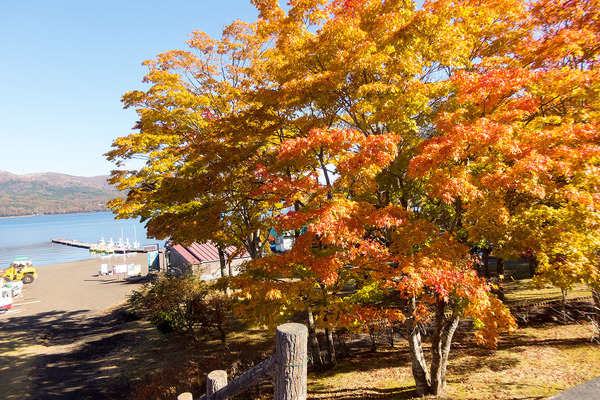 山中湖の秋2016-1