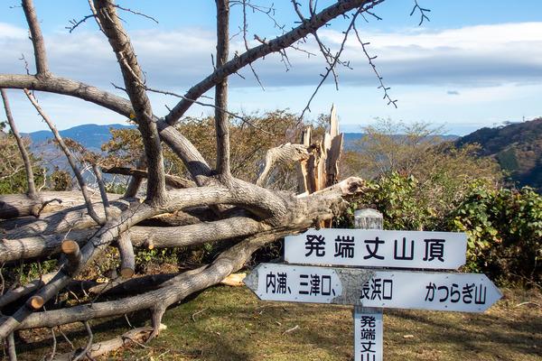 発端丈山の銀杏の木-1