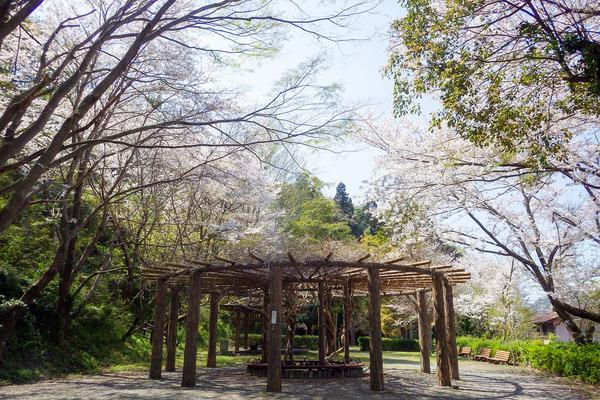本城山公園2019