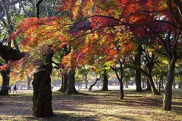 代々木公園2013-1