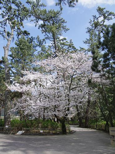 沼津御用邸記念公園1