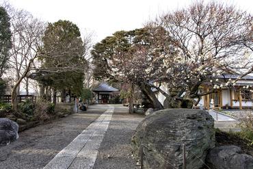 観音寺2015-1