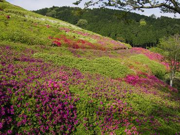 姫の沢公園2011-1