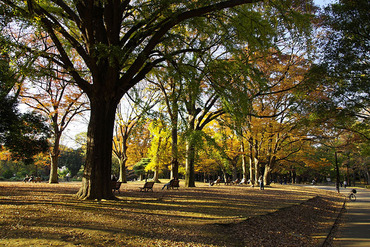 代々木公園2013-2