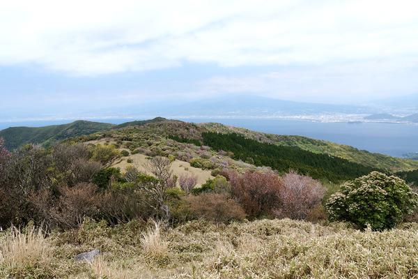 金冠山の桜2017-2