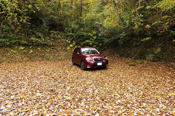 落ち葉の駐車場