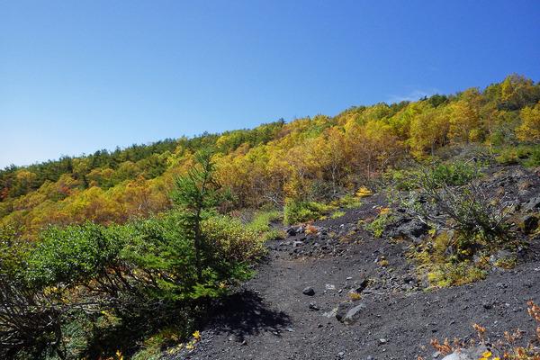 富士山富士宮口の紅葉2015-2
