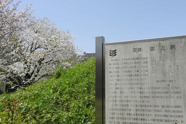 大宮交通公園の桜2