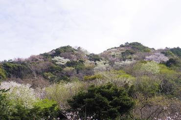 黄金崎2014-2