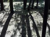 竹林と団栗