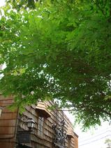 SINと樹木