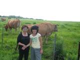 阿蘇放牧牛