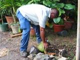 椰子の実割