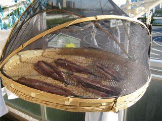 秋刀魚の干物2