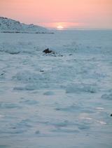 陽の沈む流氷