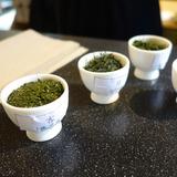 日本茶を楽しむワークショップ3