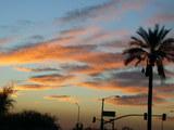 sedona palm tree