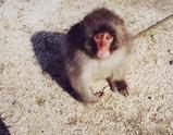 猿 赤ちゃん
